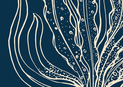 Hidden Champion of the Ocean. Seaweed as a growth engine for a sustainable European future