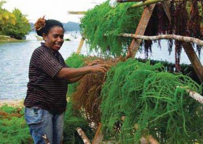 The Global Status of Seaweed Production, Trade and Utilization