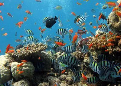 The Ocean Finance Handbook
