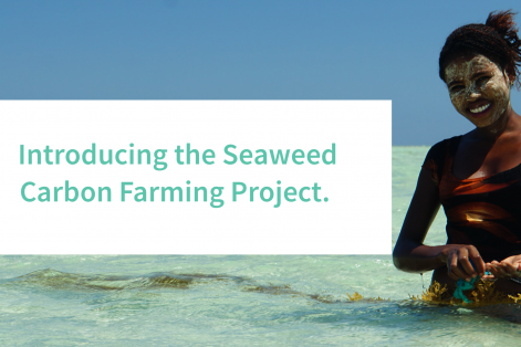 Oceans 2050 launches the Seaweed Carbon Farming Project