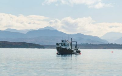 Can seaweed help to solve coastal dead zones?