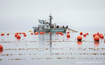 Report shows how restorative aquaculture has positive impacts on marine life