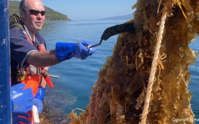 Oceanium and seaweed farming partners featured on the BBC